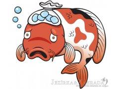 Jaké choroby trápí okrasné ryby a KOI kapry?