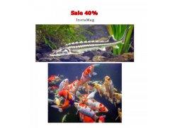 Sleva 40% na okrasné ryby
