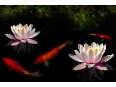 Sleva 30% na vodní květiny