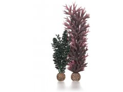 Oase biOrb set rostlin fialová a tmavě zelená