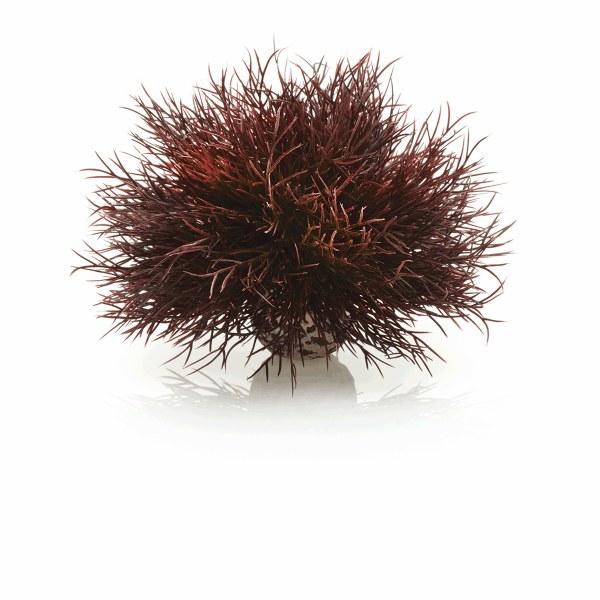 Oase biOrb vodní ozdobná tráva červená - Akvaristika Oase biOrb Dekorace a příslušenství Rostliny