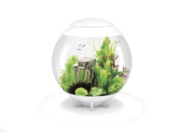 Oase biOrb HALO 60 LED (akvárium bílé) - Akvaristika Oase biOrb Akvária biOrb biOrb HALO
