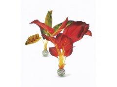 Oase biOrb rostliny zelená a červená velké (dekorační rostliny)