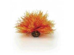 Oase biOrb vodní ozdobná tráva oranžová (dekorační rostliny)