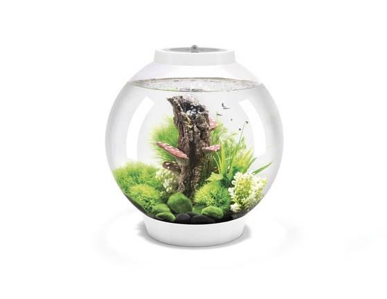 Oase biOrb CLASSIC 30 MCR (akvárium bílé) - Akvaristika Oase biOrb Akvária biOrb biOrb CLASSIC