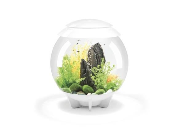 Oase biOrb HALO 30 LED (akvárium bílé) - Akvaristika Oase biOrb Akvária biOrb biOrb HALO